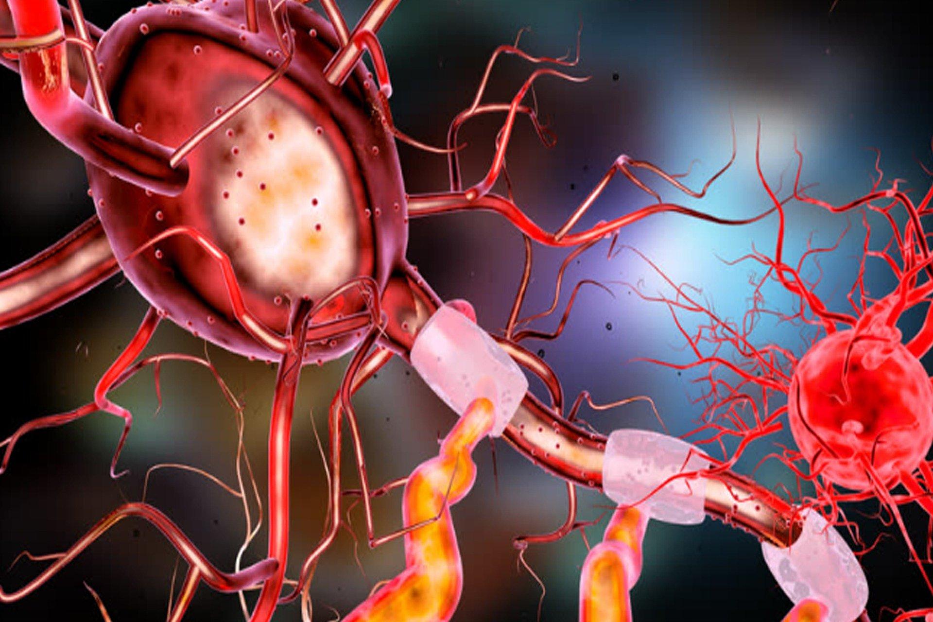 נוירונים. Image by irfan ullah from Pixabay