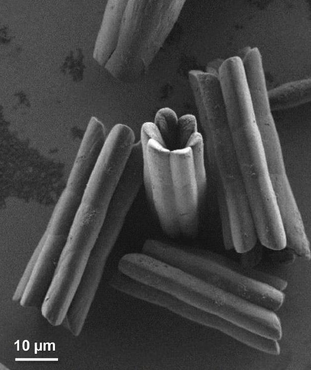 הגבישים החלולים תחת מיקרוסקופ אלקטרונים סורק. צילום: מכון ויצמן